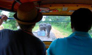 Un mois en Inde du Nord: Itinéraire et budget
