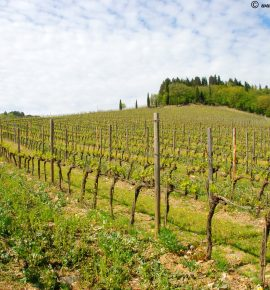 The Chianti Wine Route in Italy