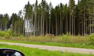 Roadtrip : 3 jours en Forêt-Noire