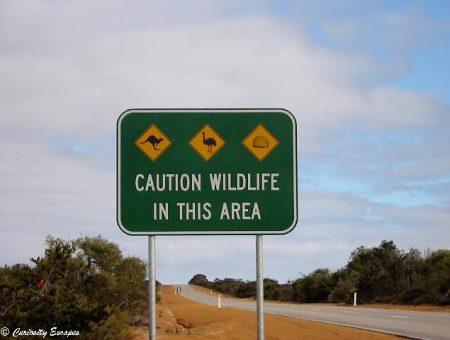 Expatriation en Australie: Pourquoi je suis partie ?