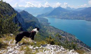 Cani-rando au lac d'Annecy: Ascension du Mont Baron & Mont Veyrier